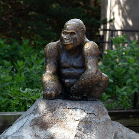saint p como gorilla